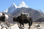 Everest Base Camp von Lukla